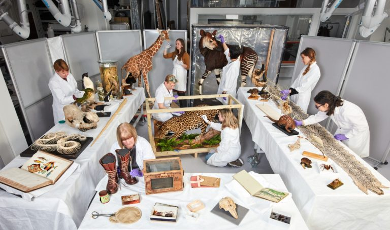 Conservators in action
